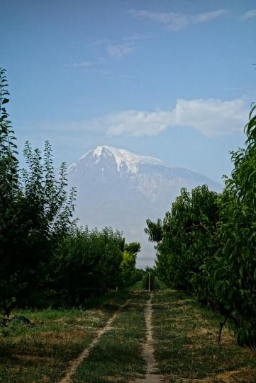 Blick durch die Obstplantagen auf den Ararat