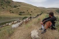 Der Hirte passierte mit seinen Ziegen genau unseren Zeltpltz