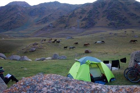 Abends besuchte uns noch eine Herde Pferde