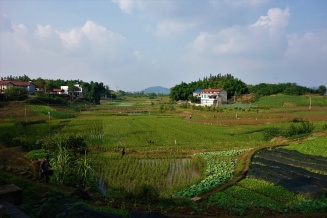 Reisfelder sind einfach überall