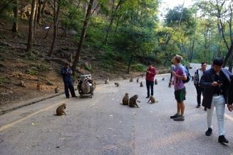 Fütterung der Affen, da ging es ganz schön rund