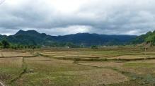 Überall Reisfelder