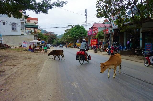 Hier hat die Kuh noch Vorfahrt