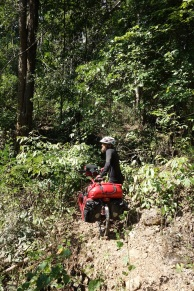 Verloren im Dschungel nach wir eine Abkürzung auf der Karte gefunden haben